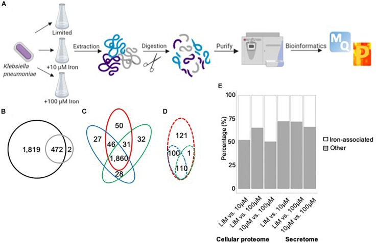 Iron Limitation in Klebsiella pneumoniae Defines New Roles for Lon Protease in Homeostasis and Degradation by Quantitative Proteomics.
